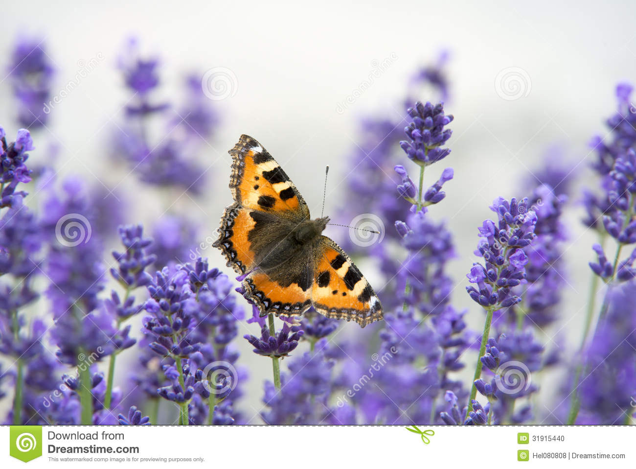 butterfly stock photos images u0026 pictures 145 013 images