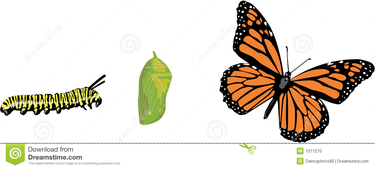 Butterfly Life Cycle Stock Photo - Image: 1011270
