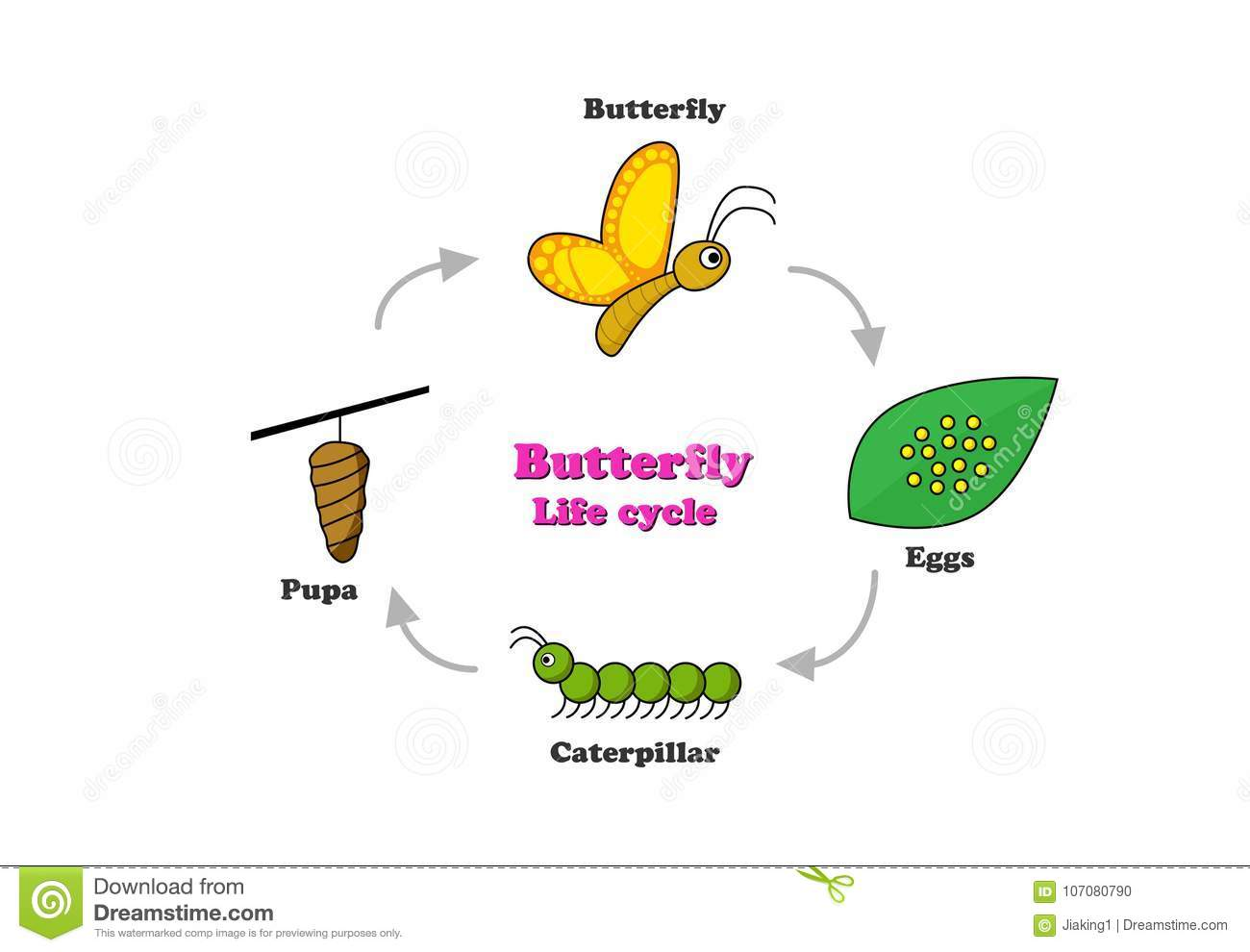Butterfly Life Cycle In Colorful Style Vector Stock Diagram Of A