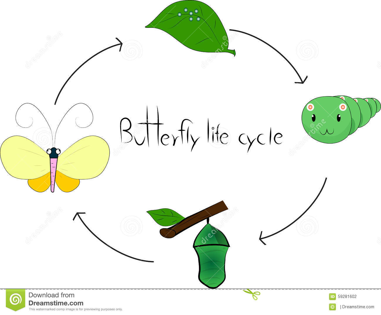 Butterfly Life Cycle Stock Vector - Image: 59281602
