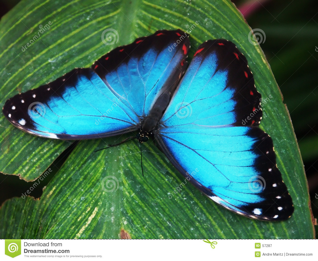 butterfly macro 3 royalty free stock photography image 57287