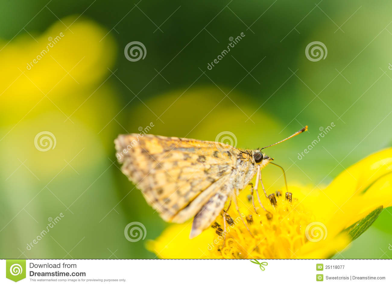 Butterfly Macro In Green Nature Royalty Free Stock Photography - Image ...