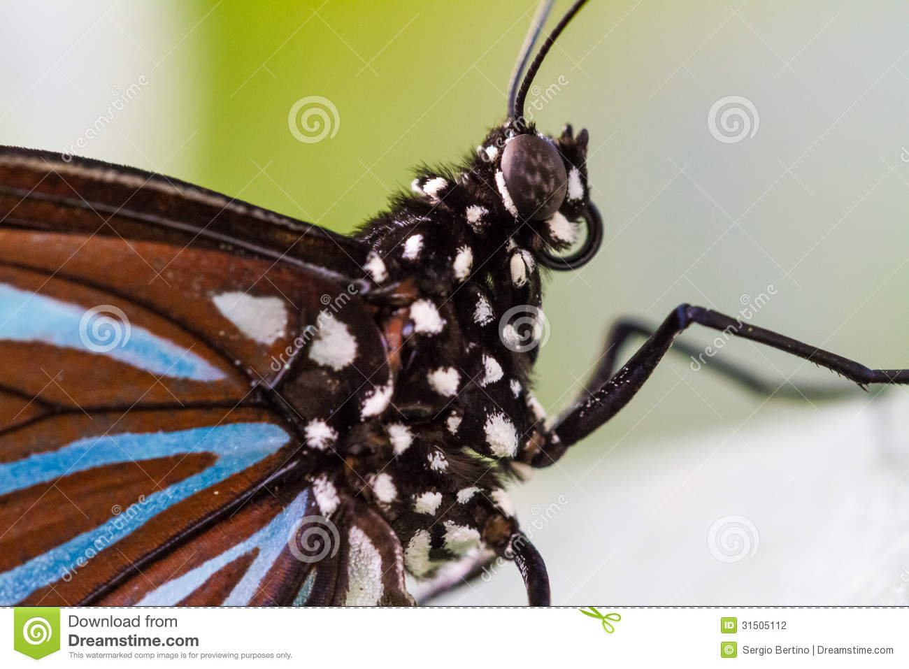 butterfly stock photo image of looking view legs