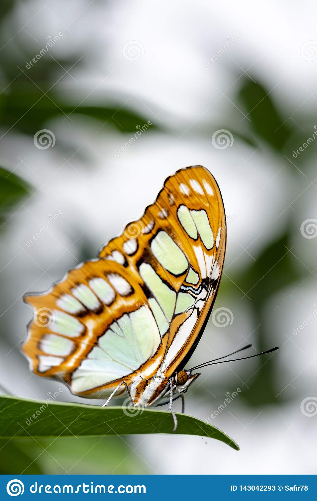 Butterfly in nature habitat