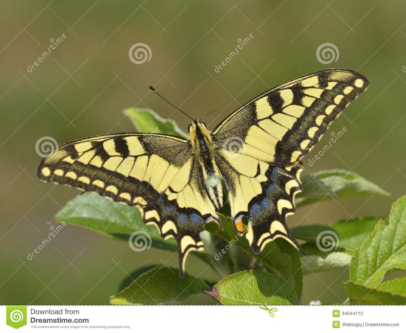 Butterfly In Nature Stock Photography - Image: 34044712