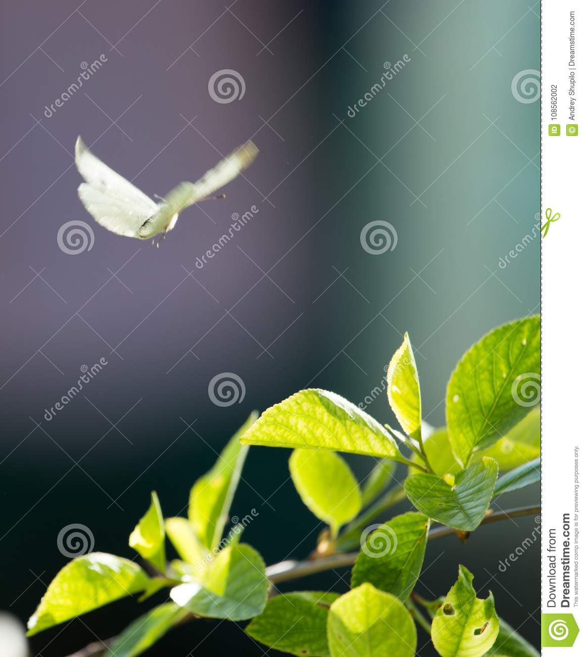 Butterfly in nature