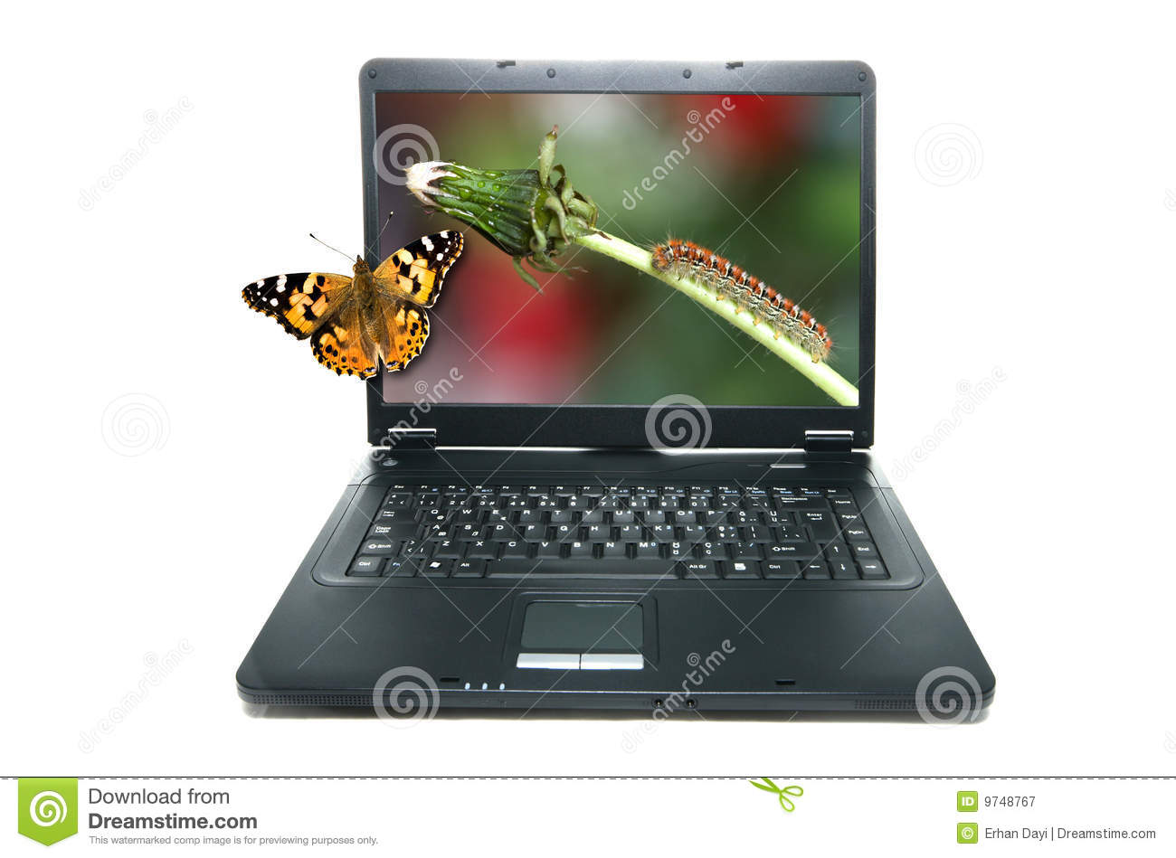 Butterfly on notebook s screen