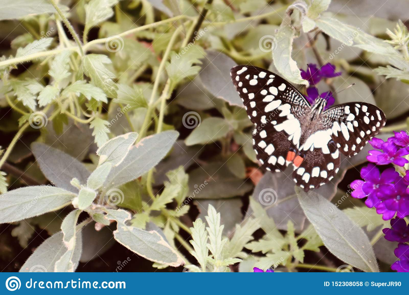 Butterfly on a plant and flower