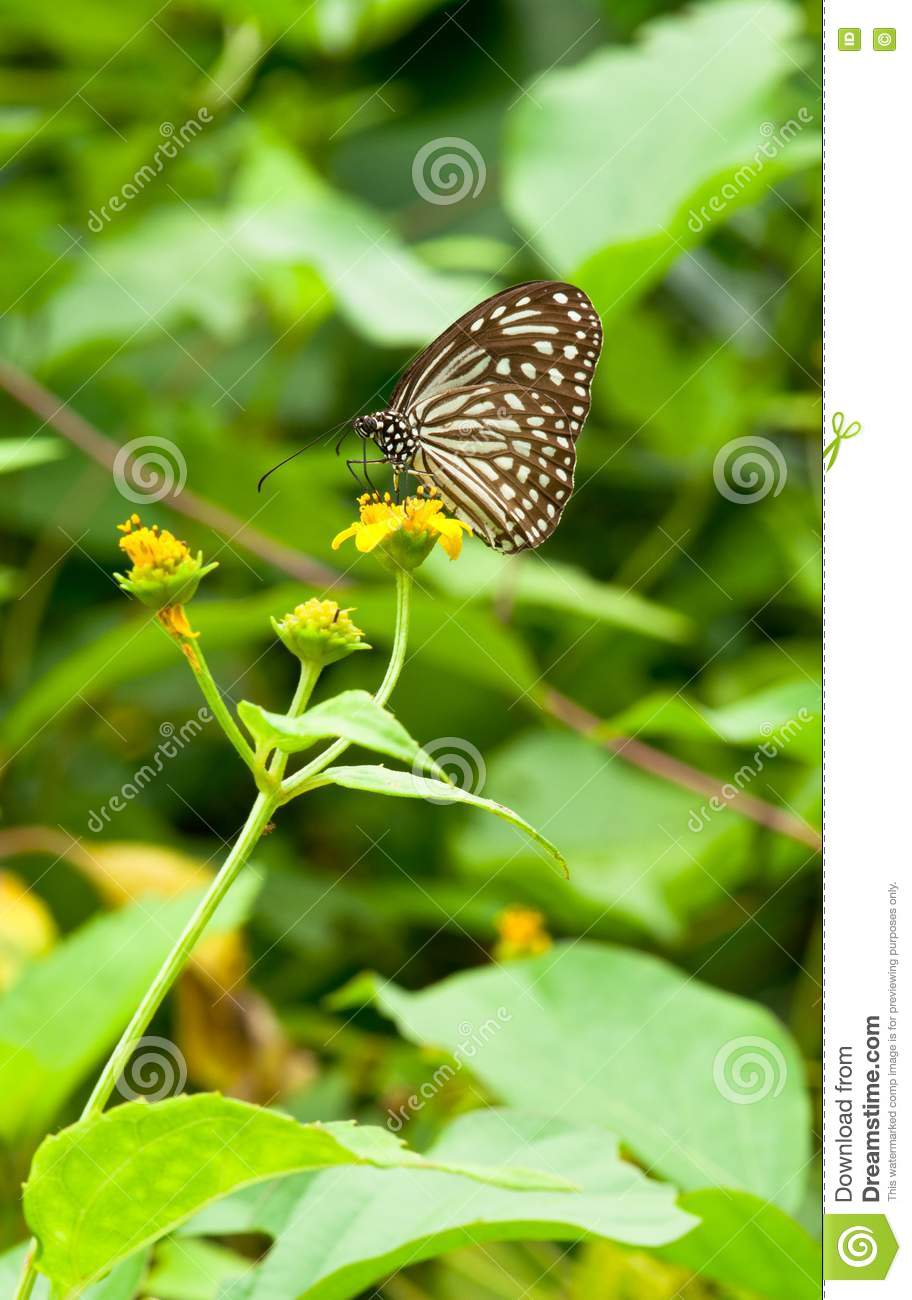 Butterfly Pollination Stock Photos Image 15191453