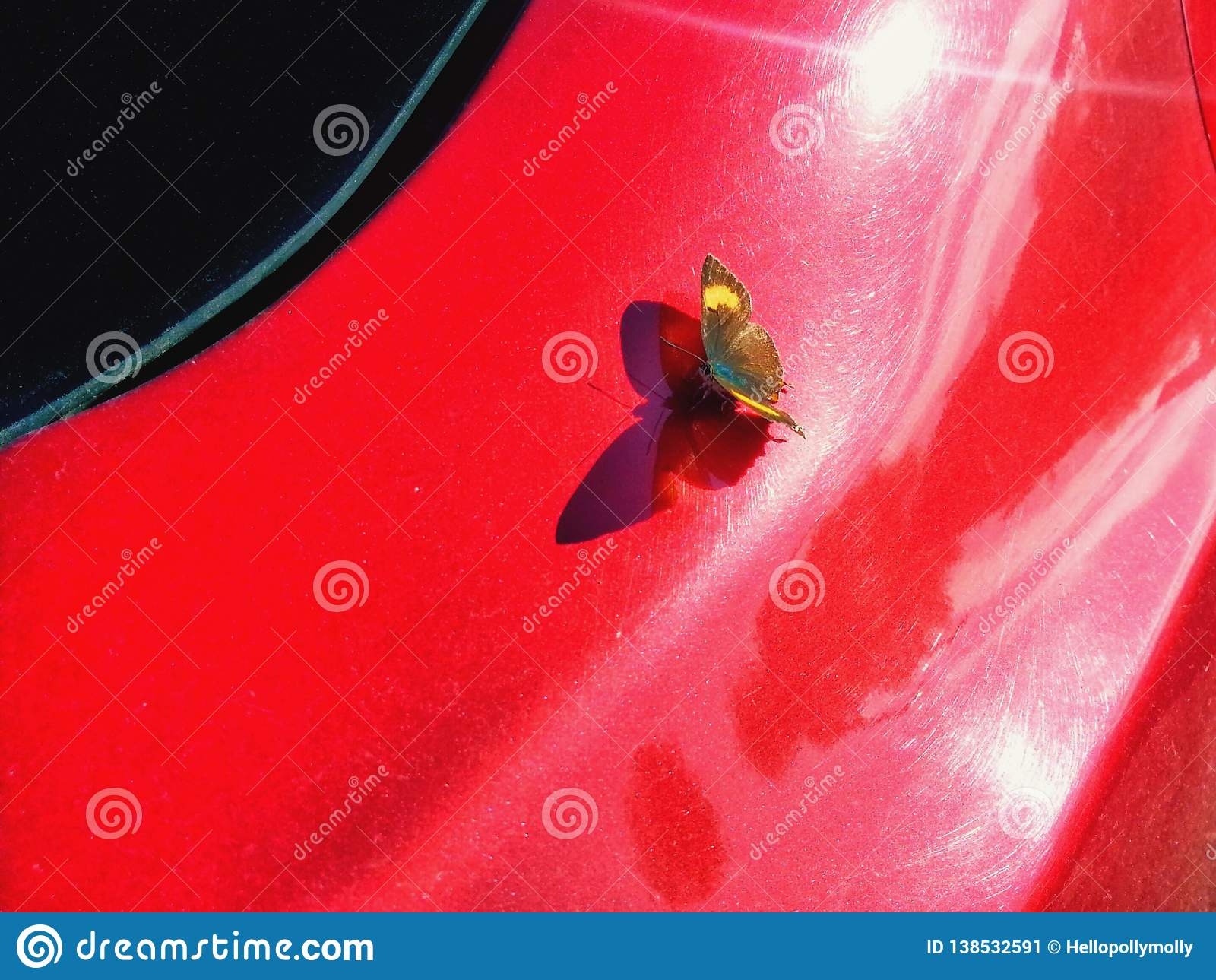 A butterfly on a red car