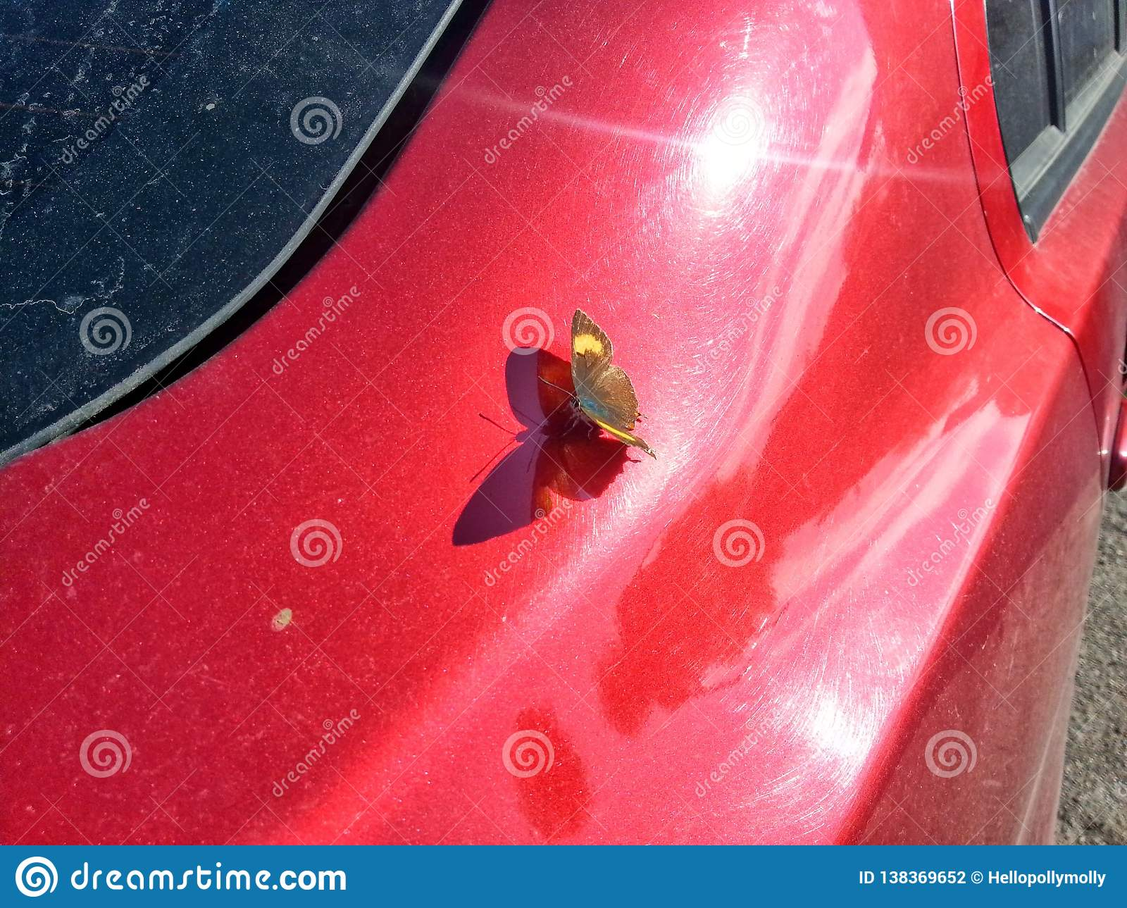 A butterfly on a red car and sun light