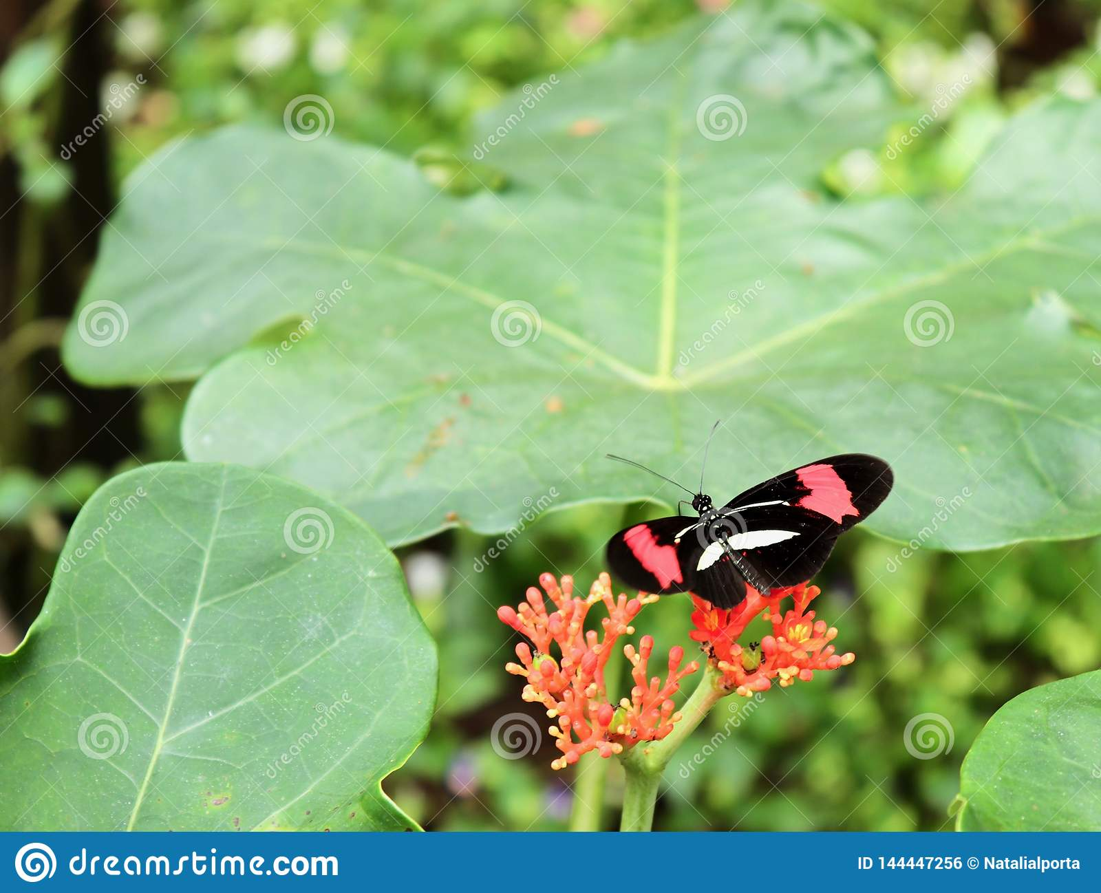 A butterfly and red flowers
