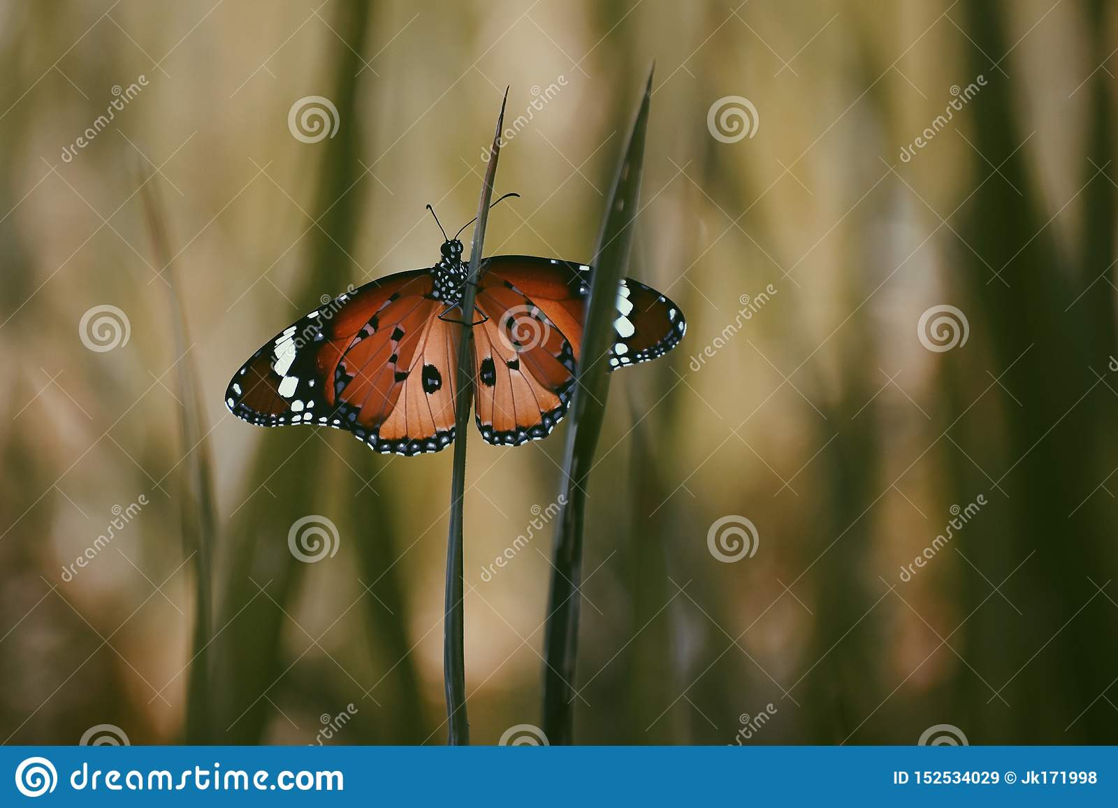 Butterfly resting on the flora