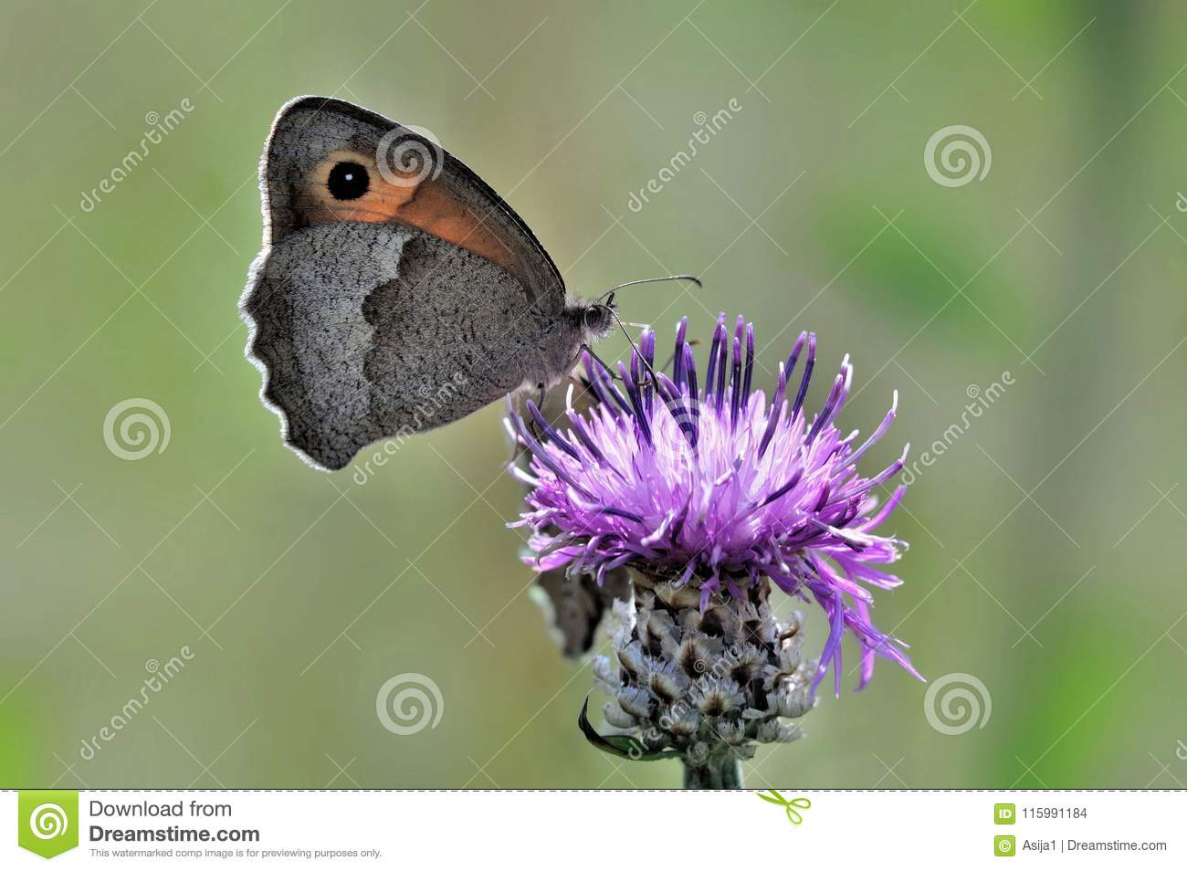 Butterfly sitting on a flower, closeup