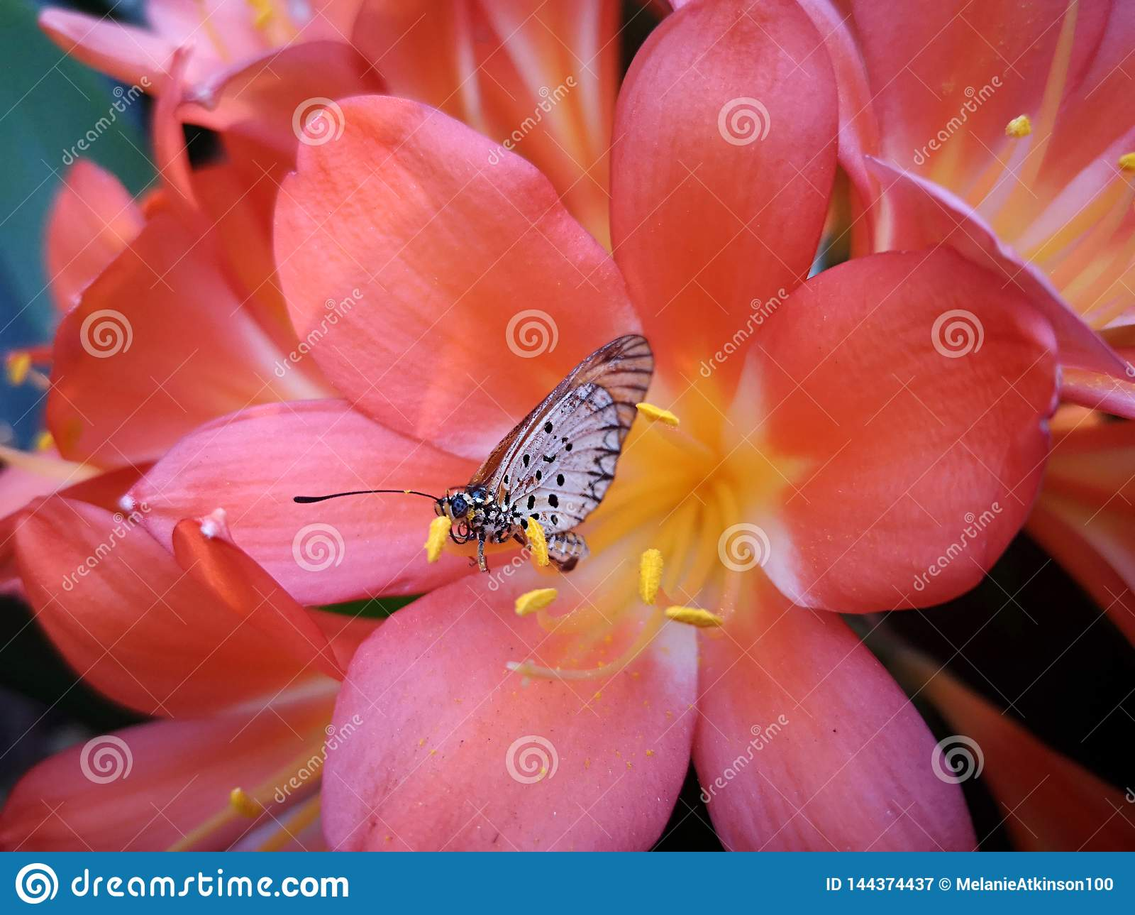 Butterfly sitting on the petal of a pink flower