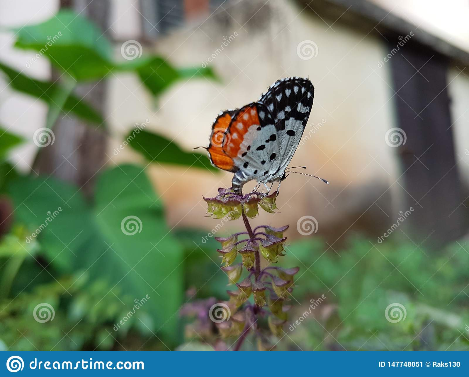 Butterfly sitting on a plant in a garden