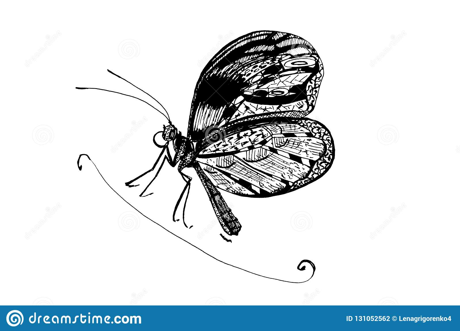 c2f48e091769b Butterfly. Sketch Of Butterfly Tattoo. Stock Illustration ...