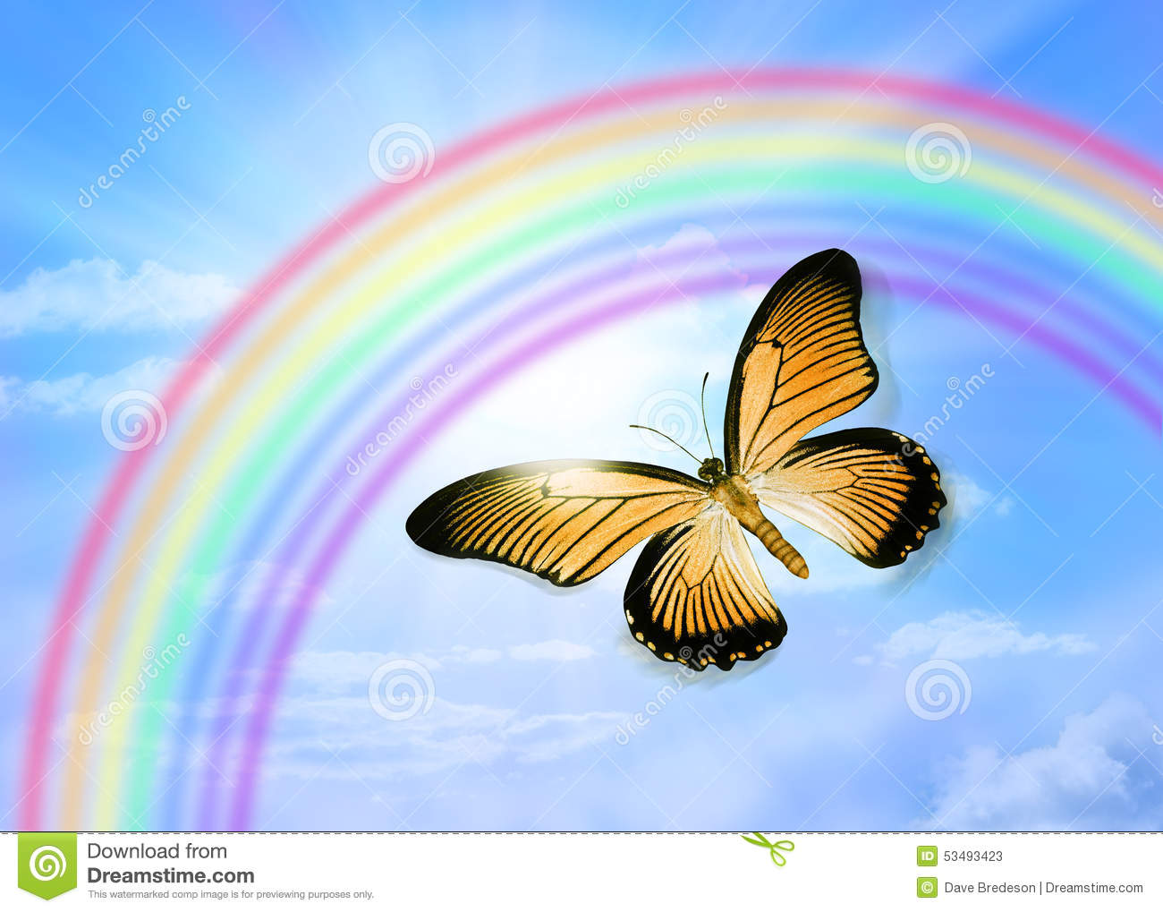 rainbow color butterfly stock photos images u0026 pictures 308 images