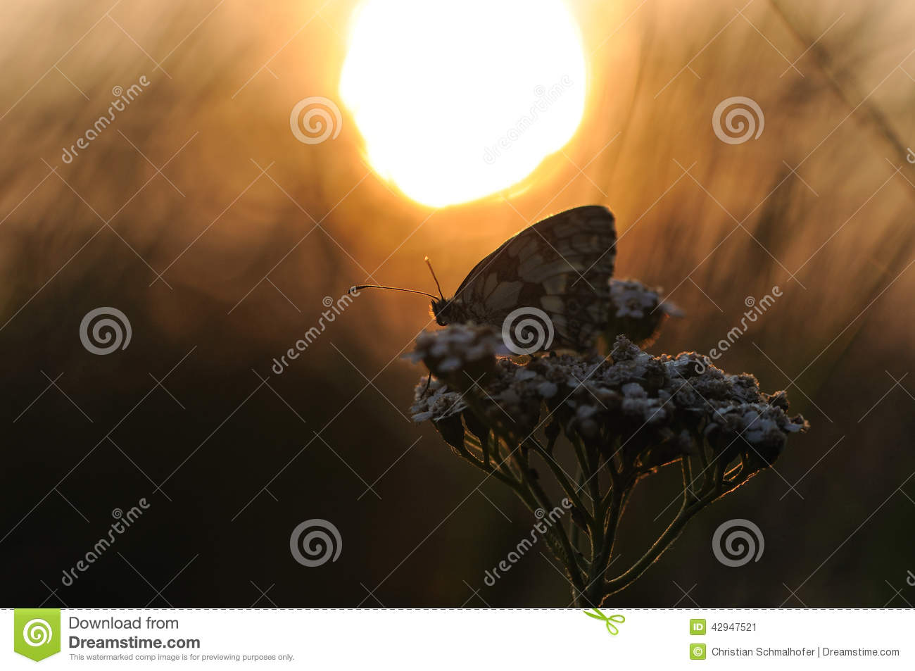 Butterfly in the Sunrise