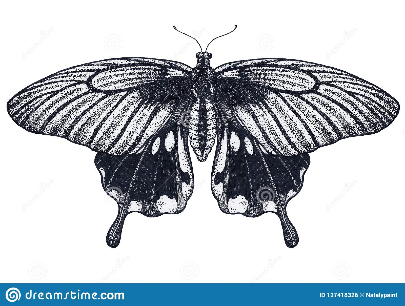c139e4c59 Butterfly tattoo design. Tropical Butterfly. Papilio Memnon. Dotwork tattoo.  Traditional black dot style ink. Royalty-Free Illustration