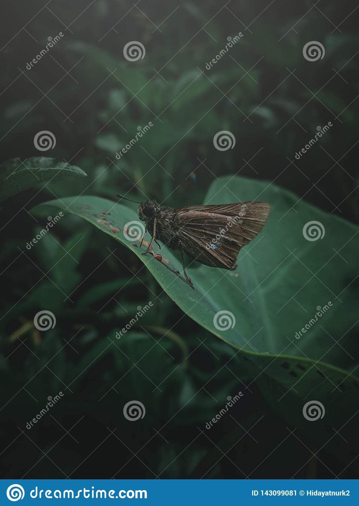 Butterfly to dark colors