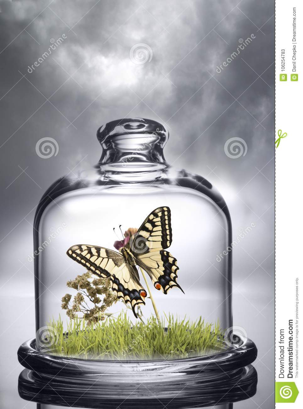 Butterfly under the protection of a glass cap. Environmental