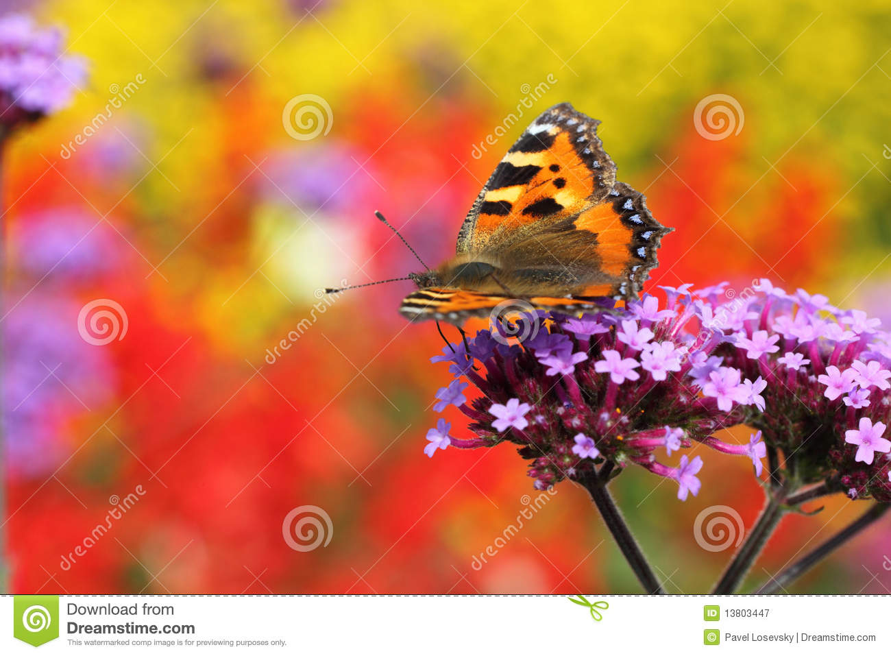 Butterfly urticaria in profile sitting on flower