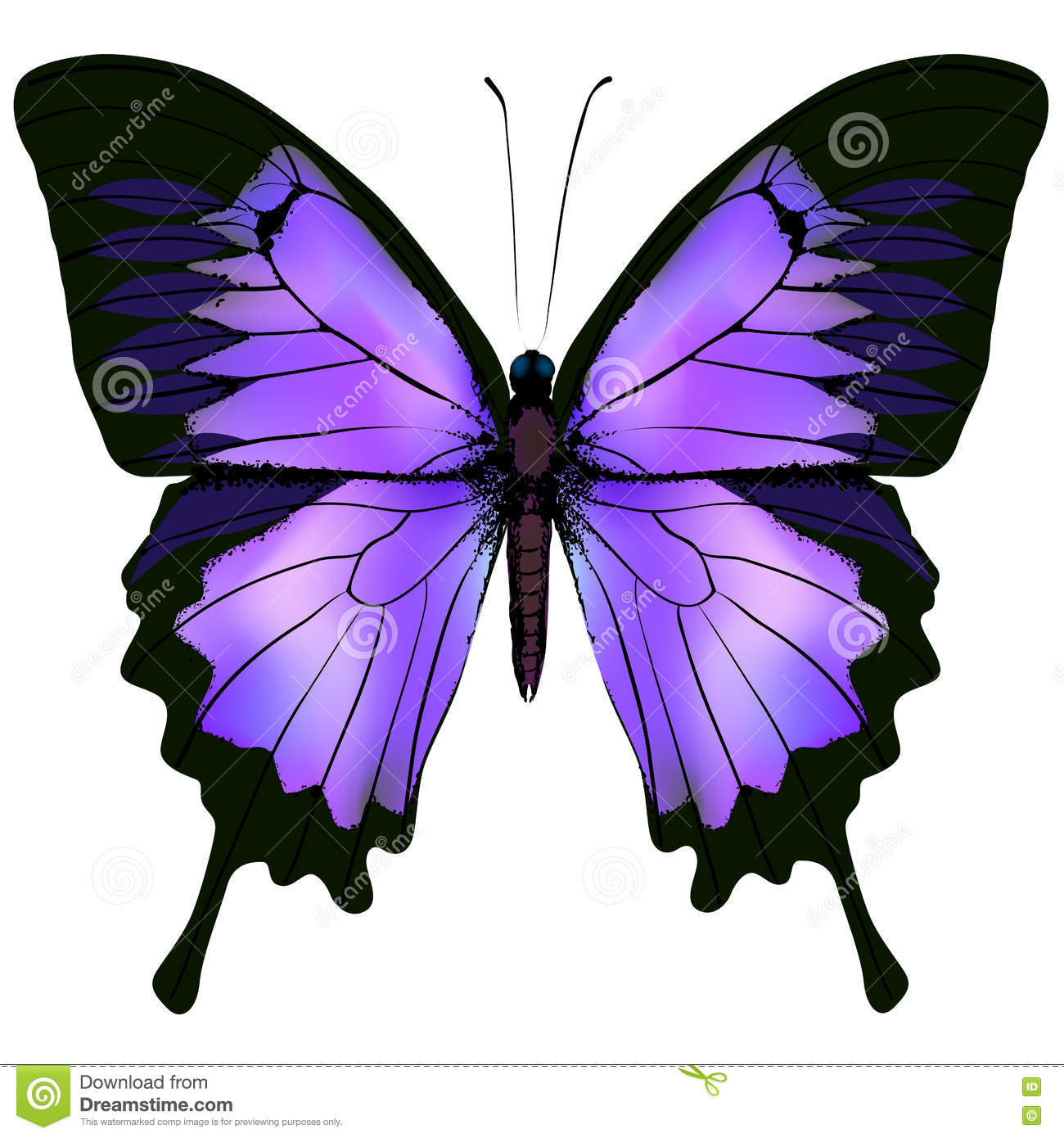 Pink butterfly vector background hd wallpapers pink butterfly vector - Butterfly Vector Illustration Of Beautiful Pink And Purple Color Royalty Free Stock Photography
