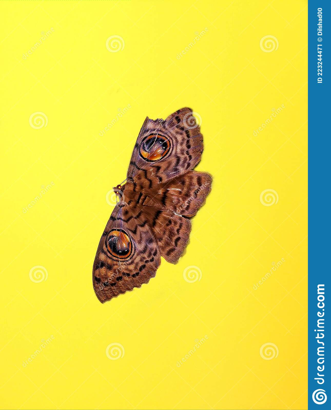 15 213 Butterfly Wallpaper Photos Free Royalty Free Stock Photos From Dreamstime