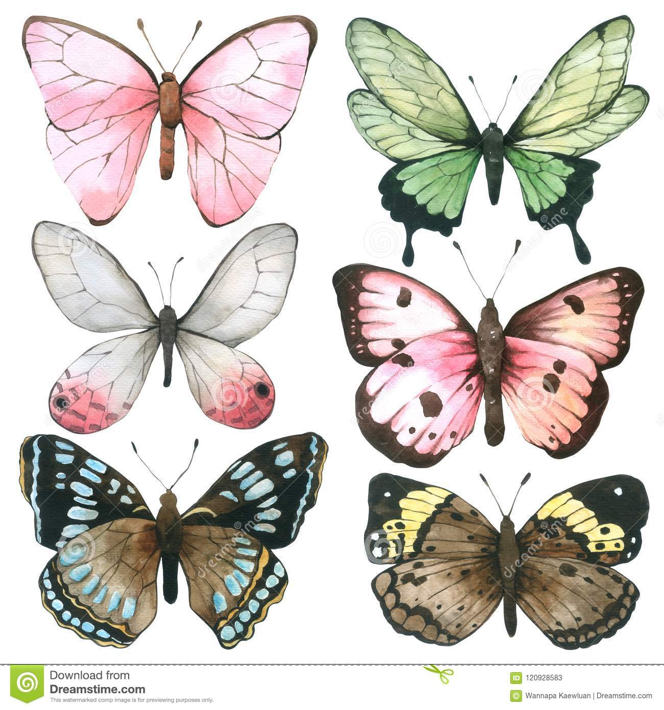 Butterfly Watercolor Collection Isolated On White ...