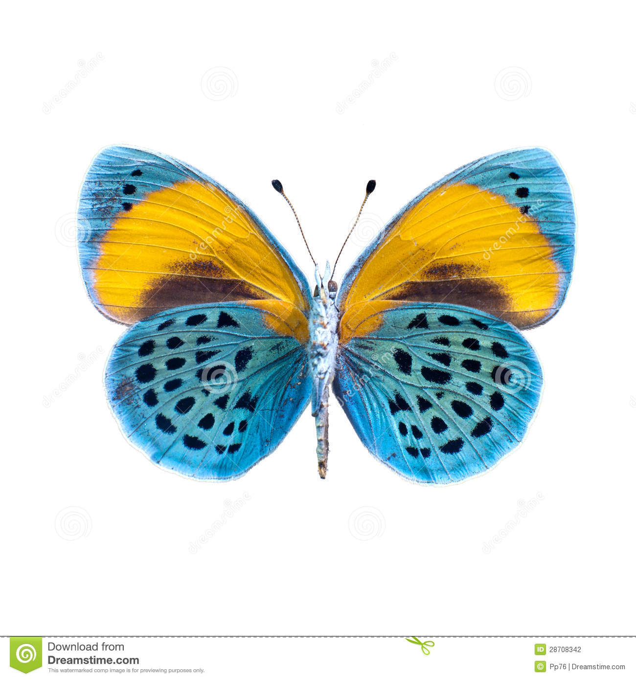 Butterfly On A White Background In High Definition Stock