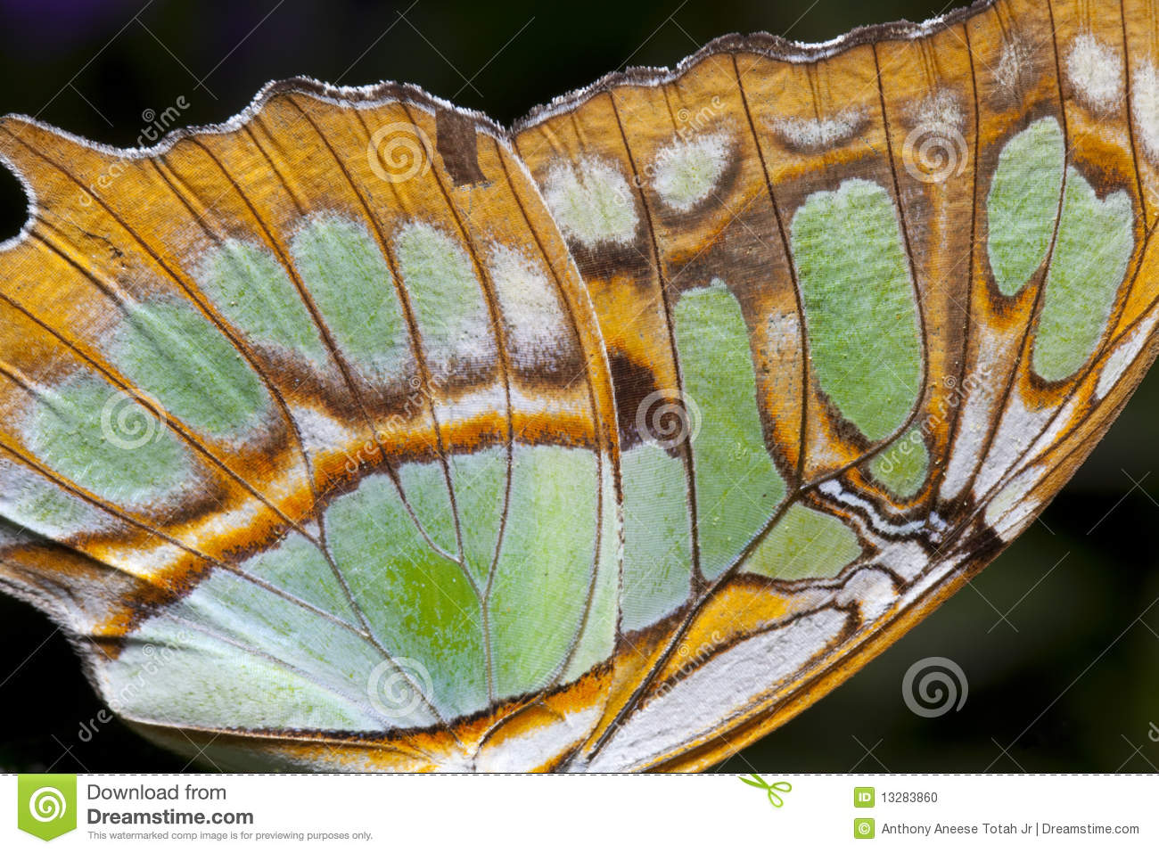 Butterfly Wing Closeup Stock Photo Image 13283860