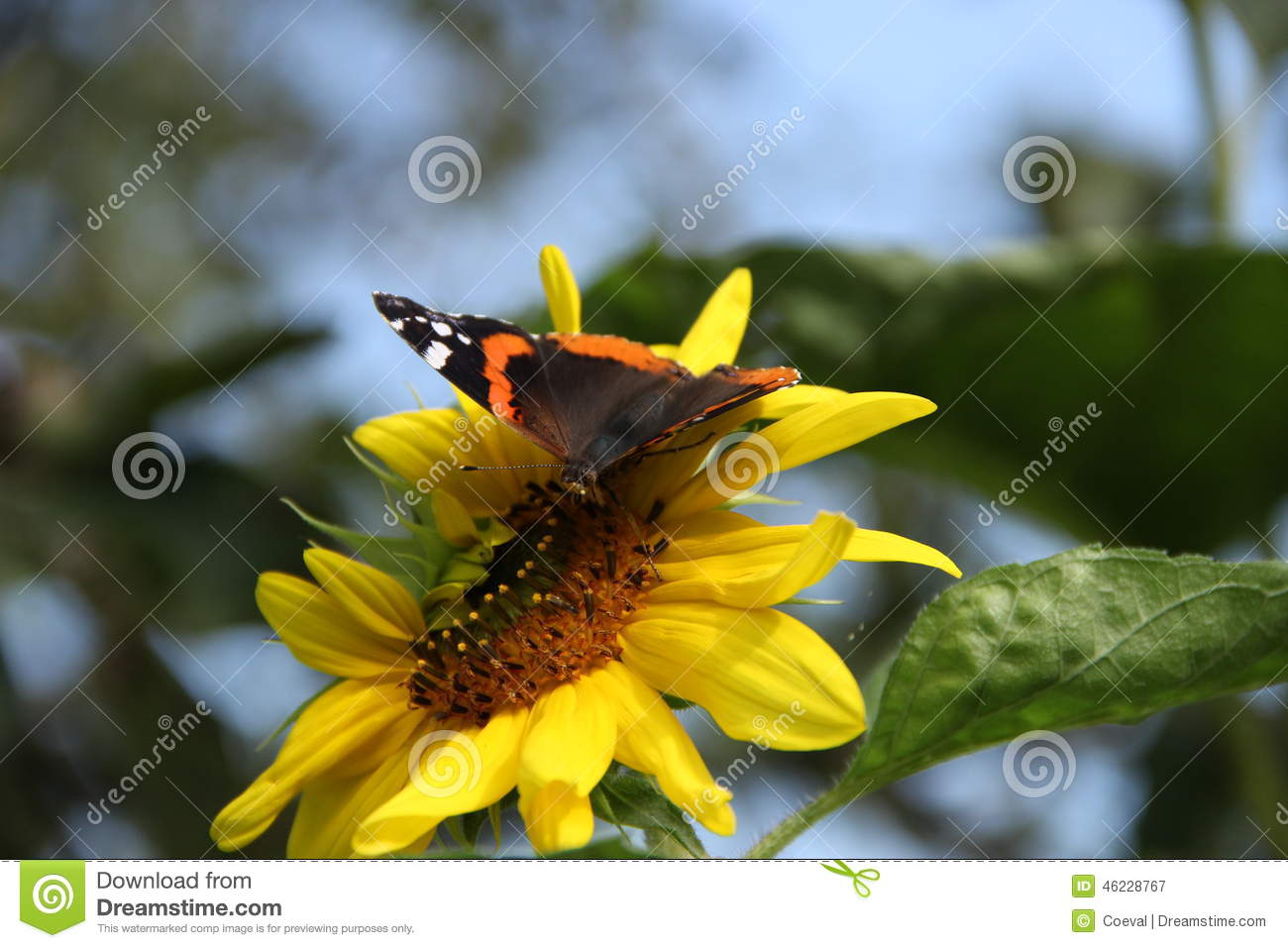 Butterfly Stock Photo Image 46228767
