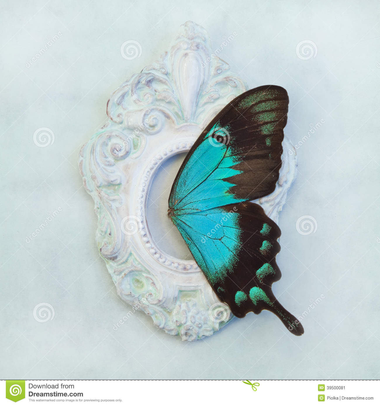 Butterfly wings in a small frame