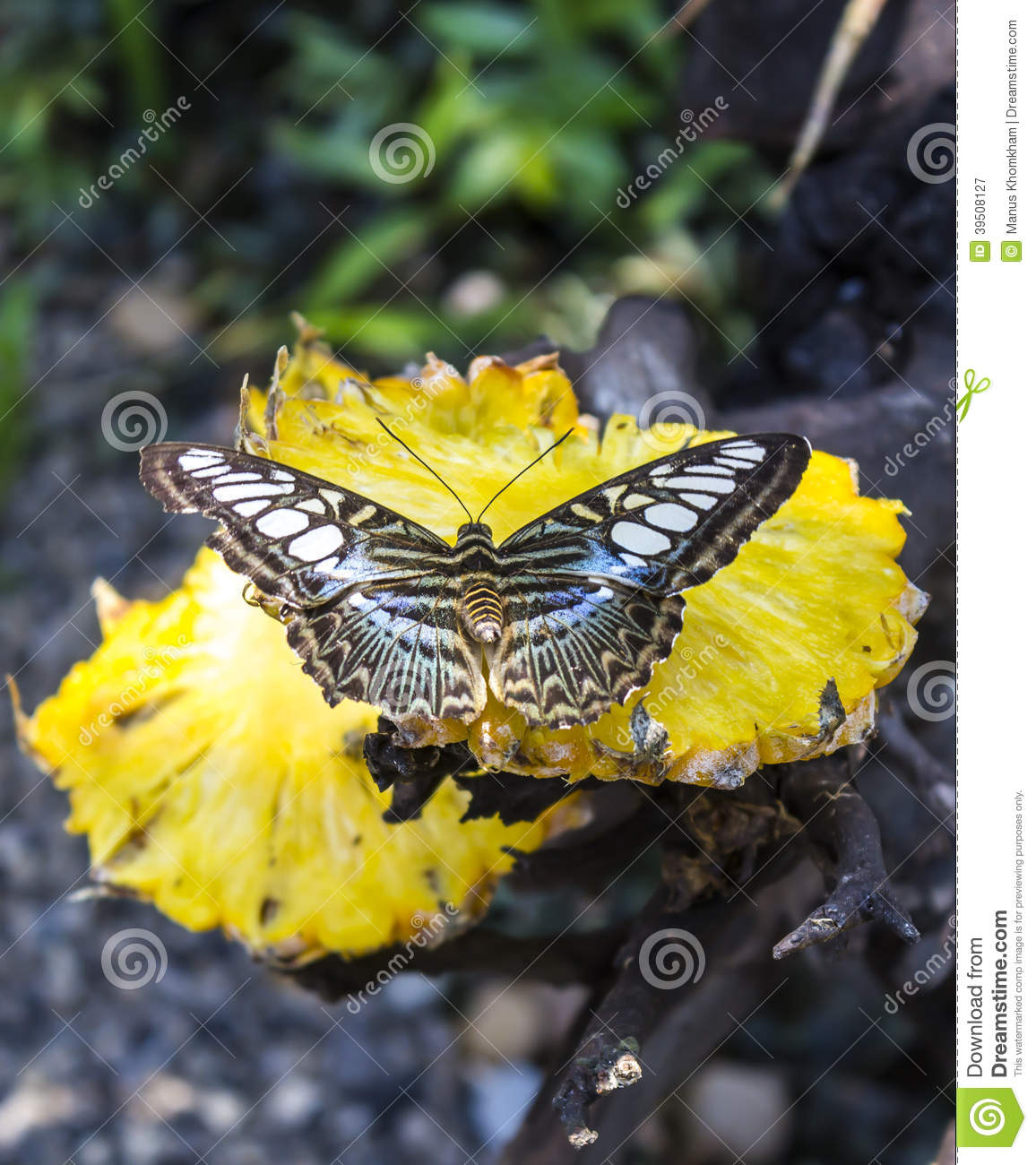 Butterfly on yellow pineapple