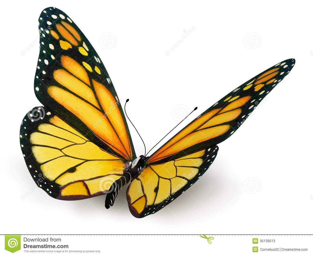 Real Butterfly Background
