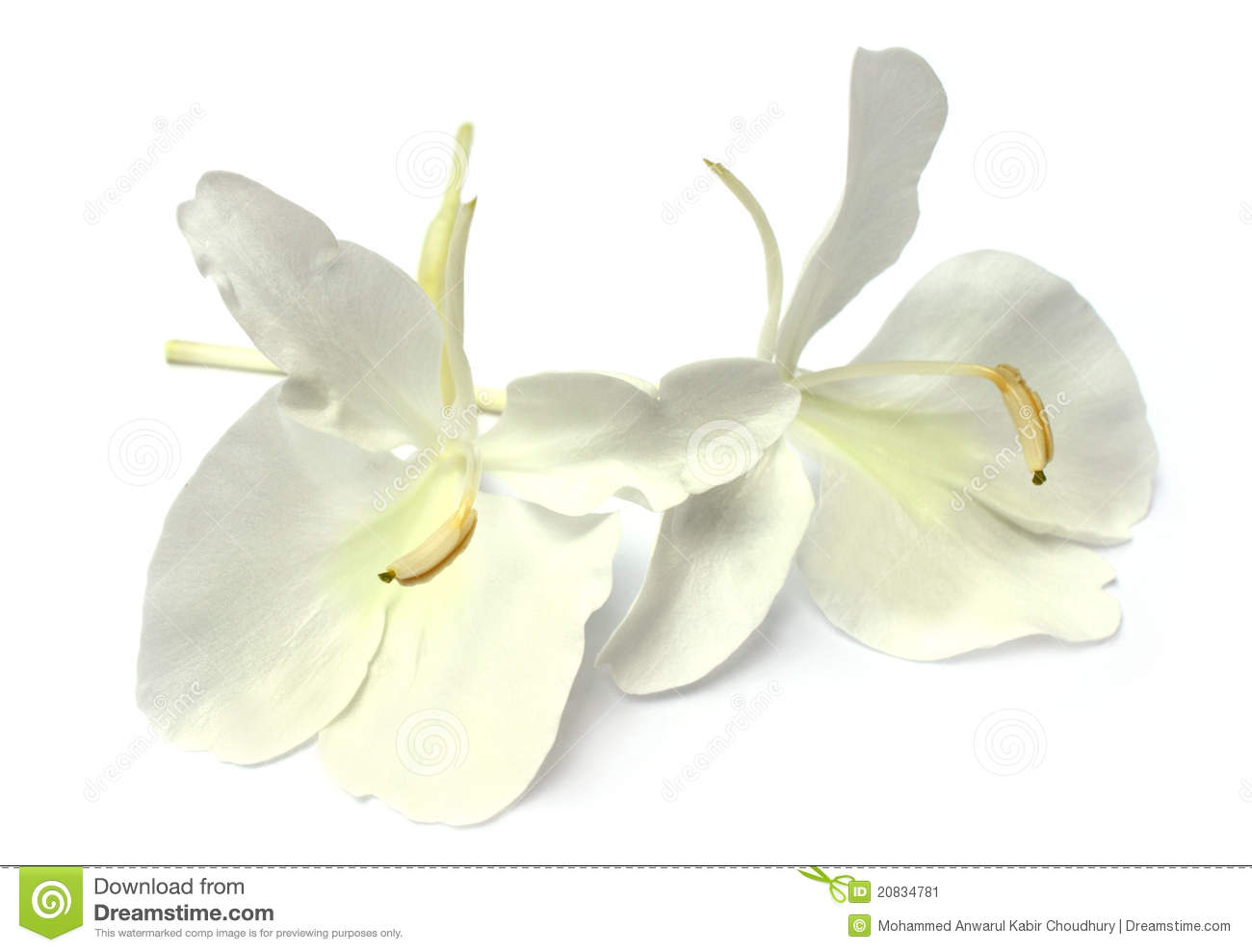 Butterflylily Or Dolanchapa Flower Of Southeast As Stock