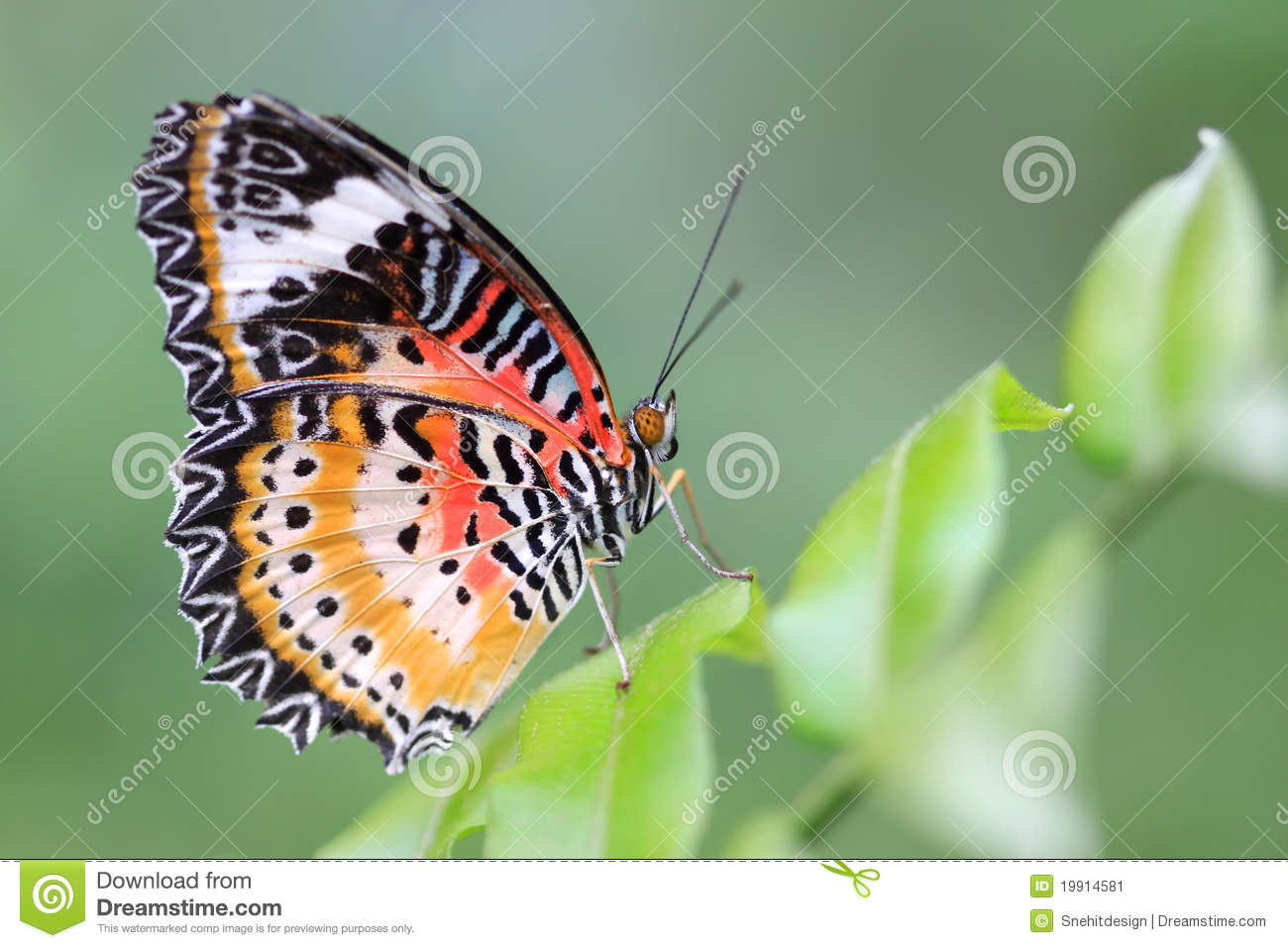 Butterly Stock Image - Image: 19914581