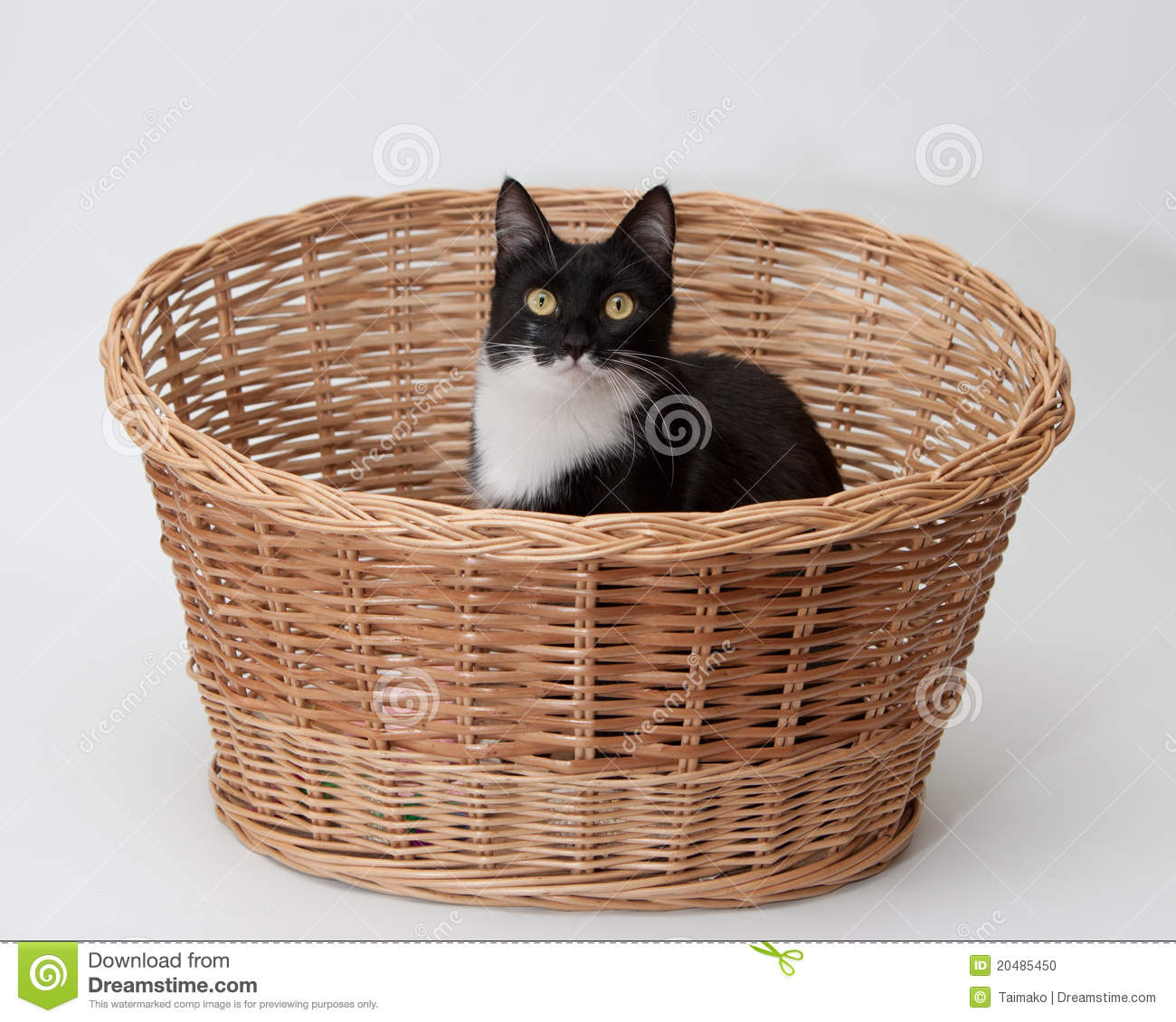 More similar stock images of ` BW cat in the basket isolated `