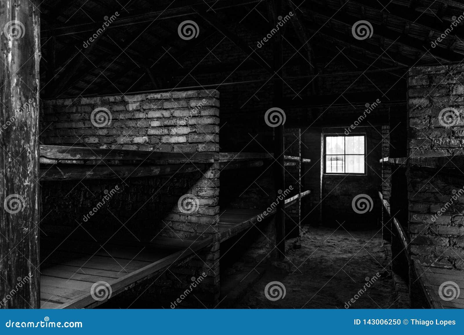BW fotografia dosypianie ćwiartki z drewnianymi koj łóżkami pokazuje więźniom okropnych warunek życiowy przy nazi