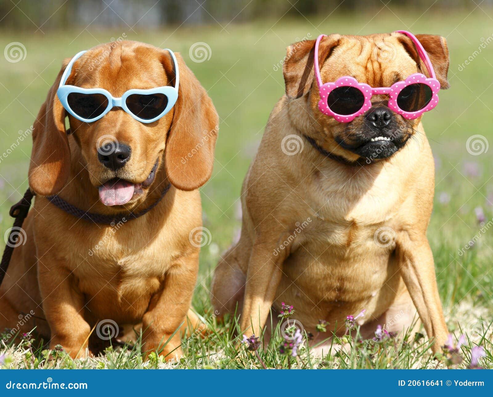 Być prześladowanym okulary przeciwsłoneczne