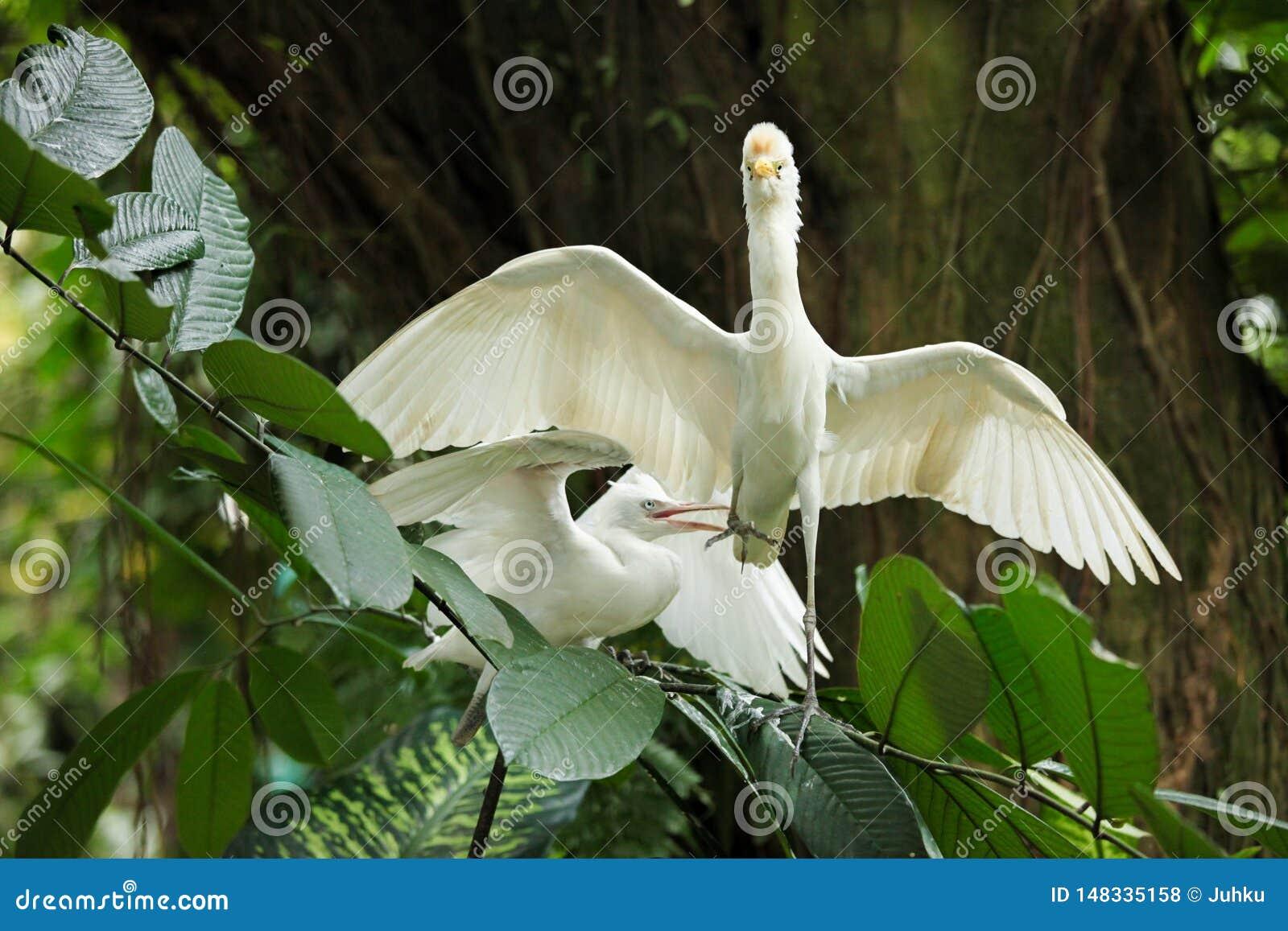 Byd?a egret koperczaki pokaz