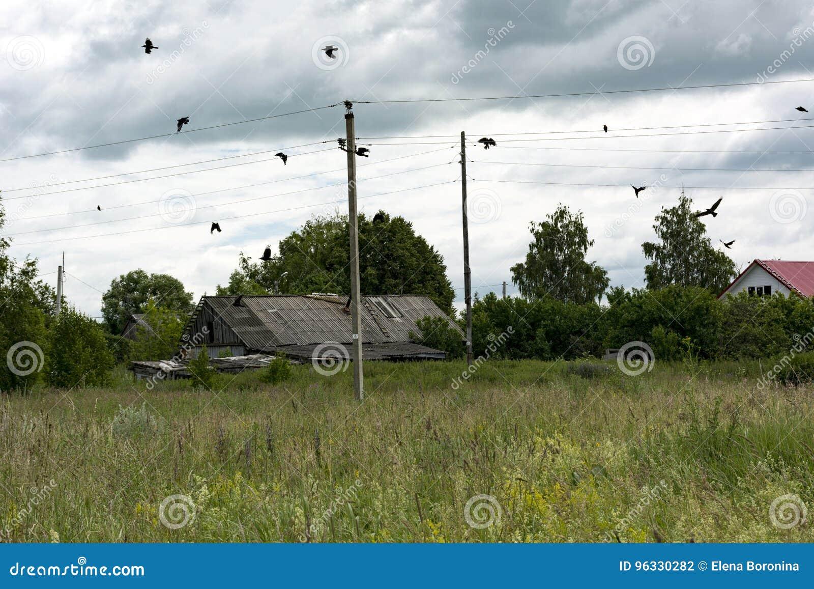 Bygd träd, fåglar, galanden över ängen, tak, pelare
