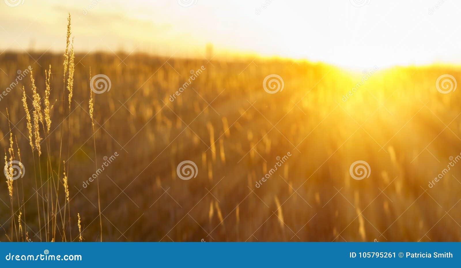 Bygdsolnedgång - sunburst