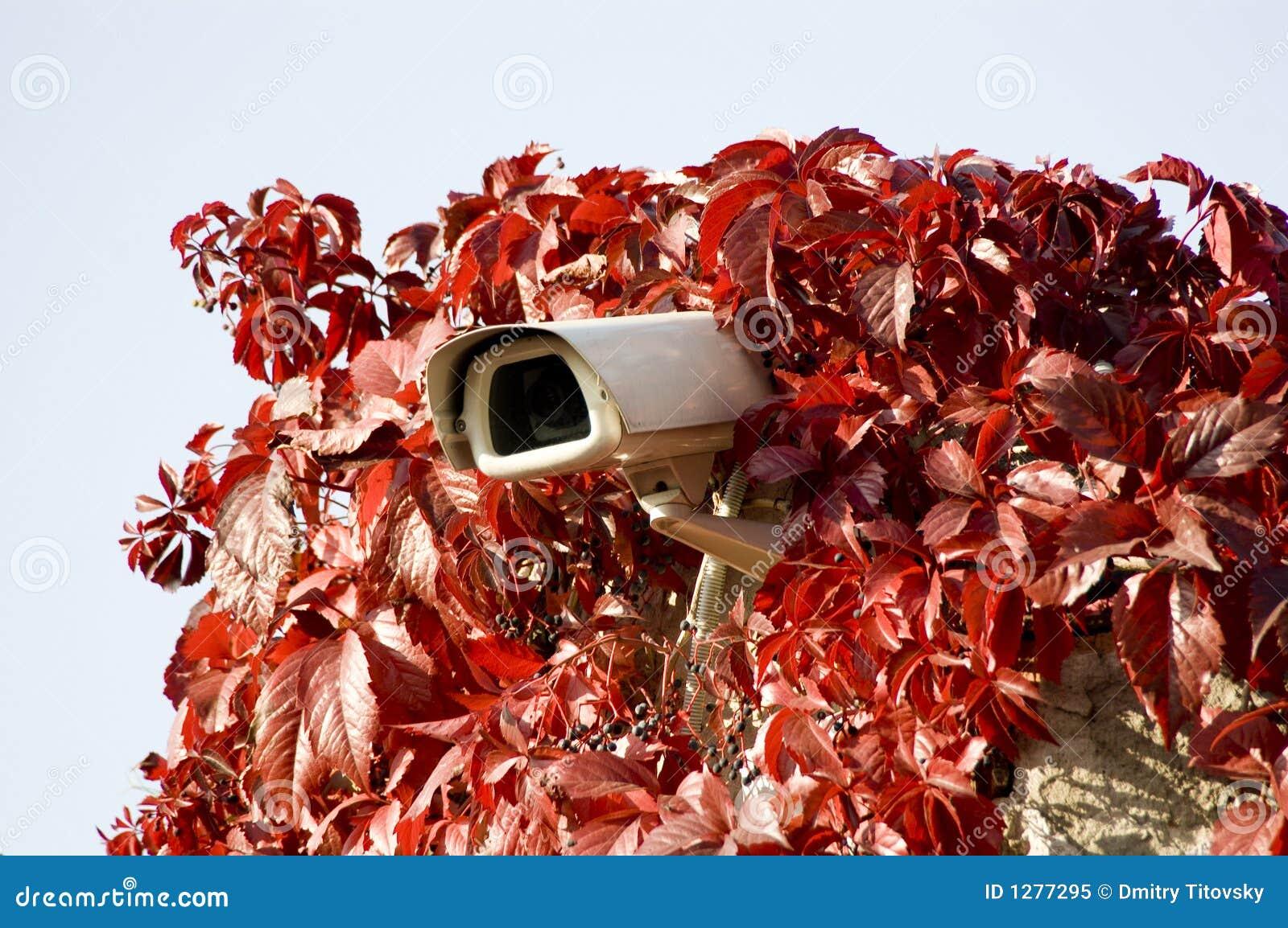 Cámaras de seguridad en hojas leídas