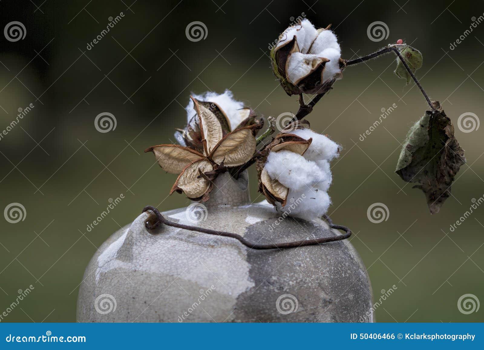 Cápsulas do algodão no jarro antigo 2 do luar