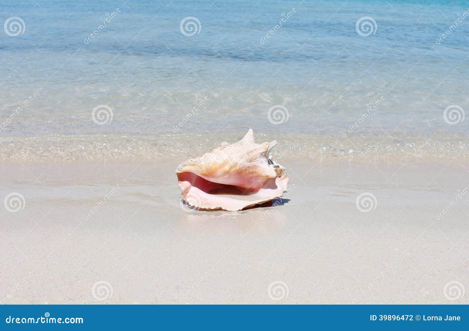 Cáscara de la concha en la playa de la arena con el mar