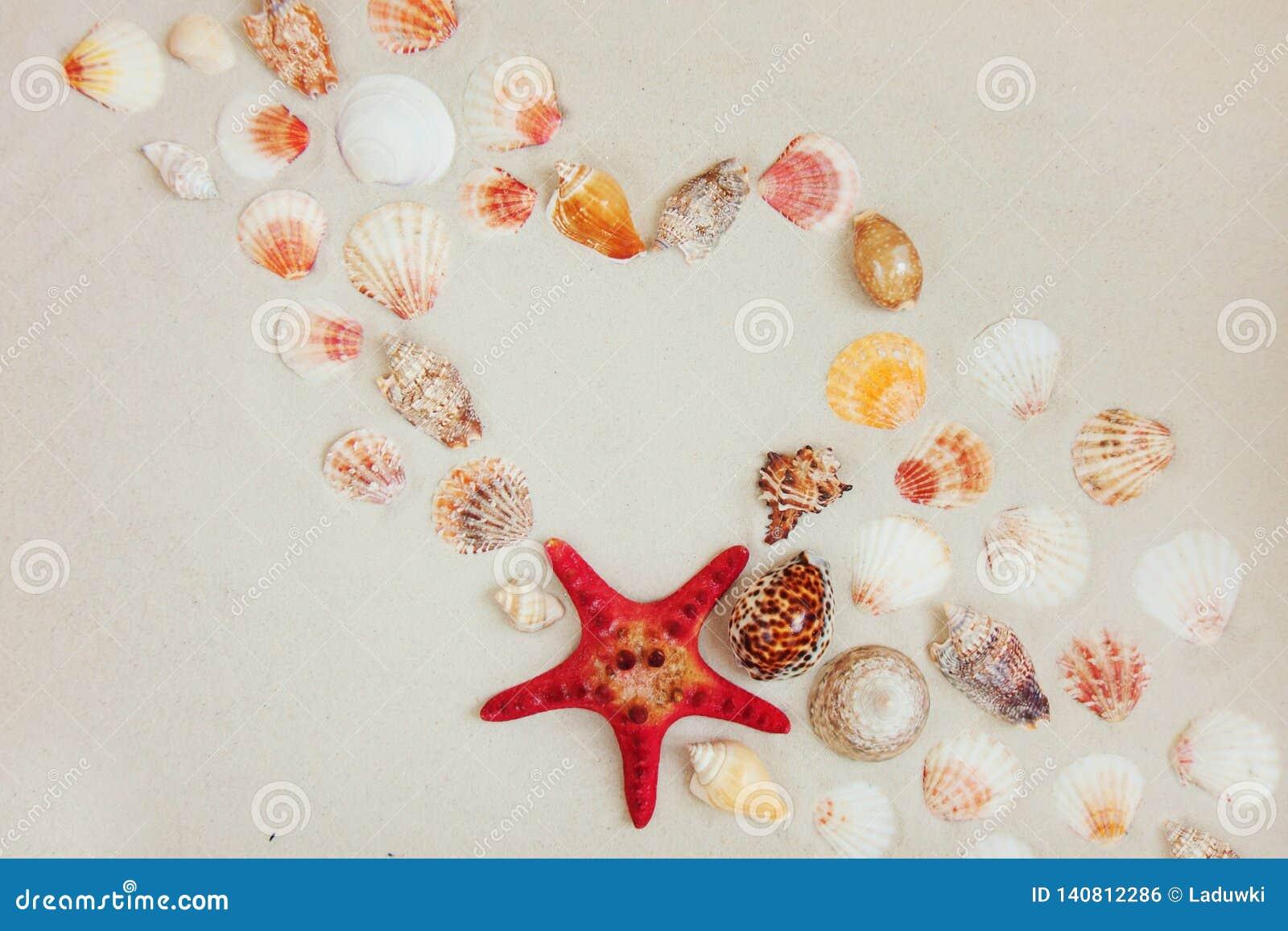 Cáscaras del mar y pescados rojos de la estrella en la playa arenosa con el espacio de la copia para el texto