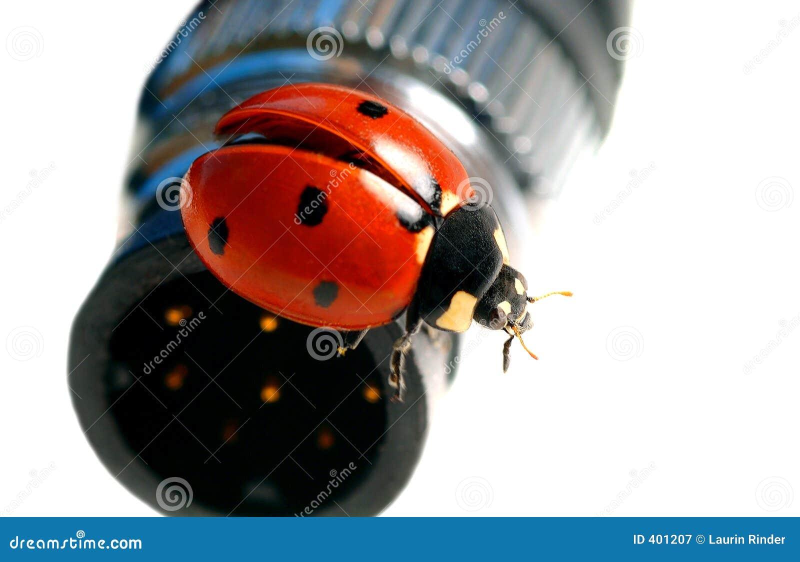 Câble de Madame Bug Gets