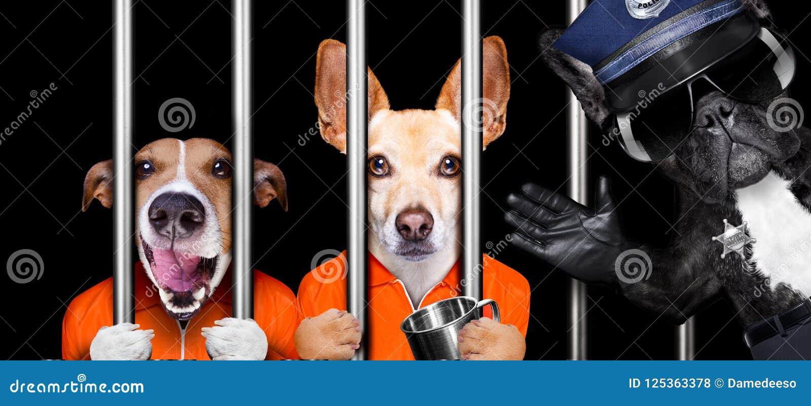Cães atrás das barras na prisão da cadeia